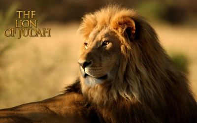 Lion-Of-Judah